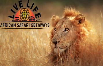 African Safari specialist